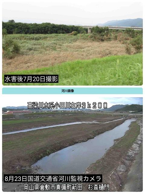 小田川の決壊点付近の水害後の草木繁茂状態と草木伐採後