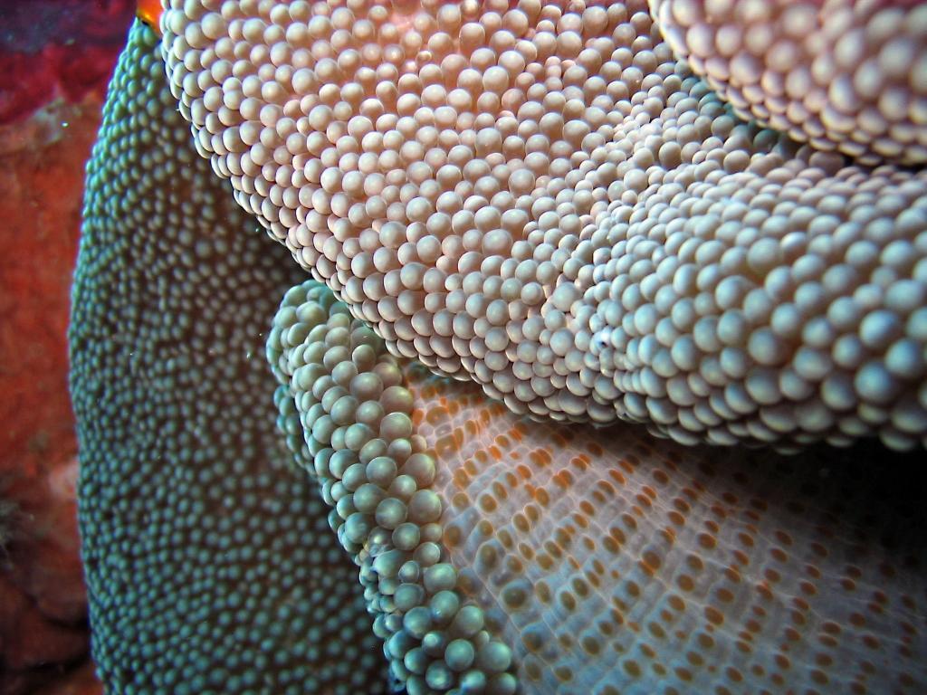 インド インドネシアu 区持っnnスイート壁紙アジア 水中 珊瑚 サンゴ礁 ダイビング スキューバダイビング Anemona 高精細の画像は 材料を入力します 壁紙