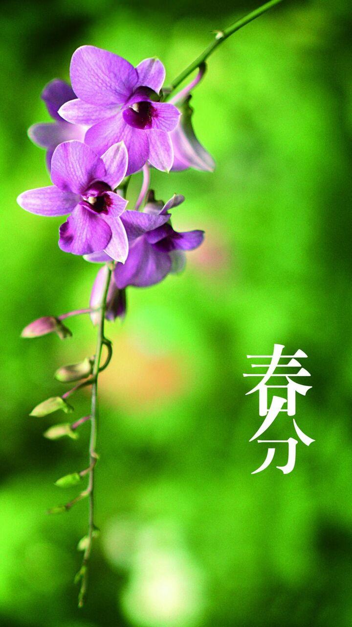 春分の花は 幸せな香り壁紙ritz Ro ロック画面の画像 携帯電話の壁紙 植物の咲きます 壁紙