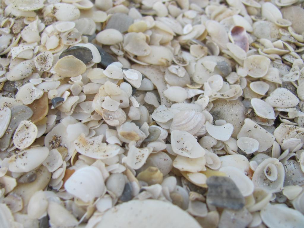 ハマグリ 砂 海 貝殻 ビーチ ビルniヒカル壁紙水 海のエッジ 高精細の画像 材料を入力します 壁紙