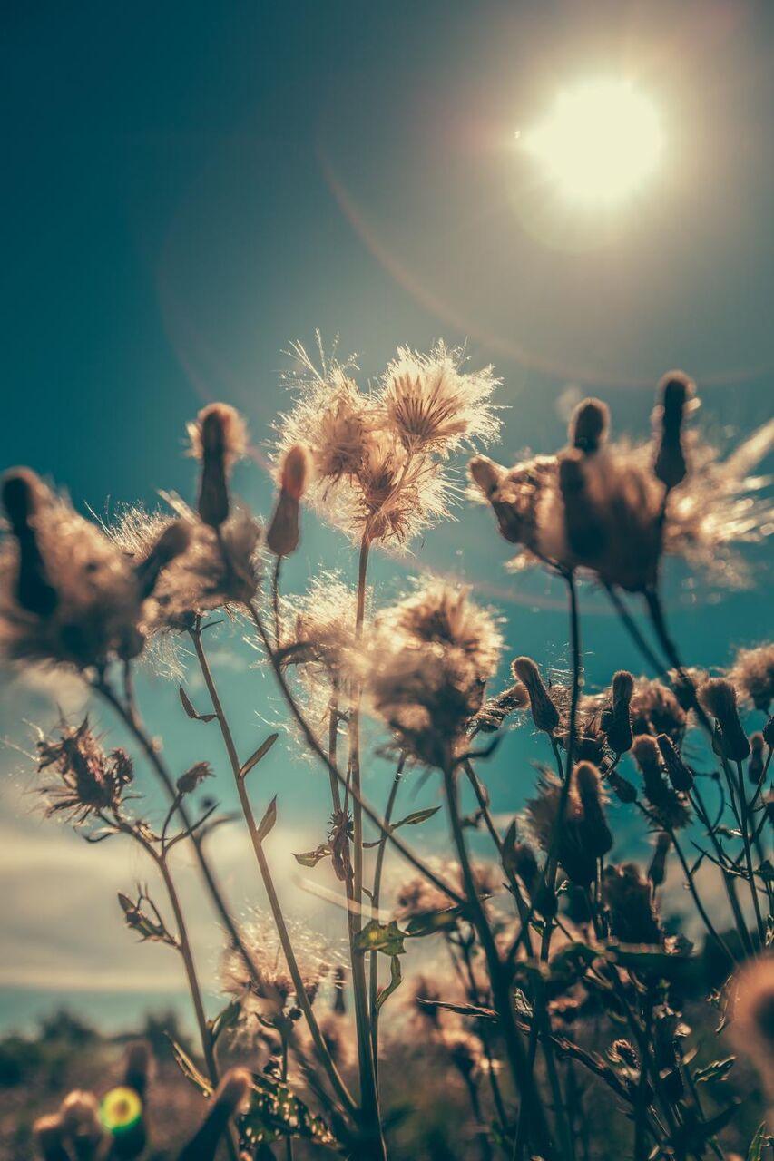 ブルーム 花 フィールド 植物 花 草 アウトドア 高解像度の画像は Iphone X壁紙アniメ材料を入力します 壁紙