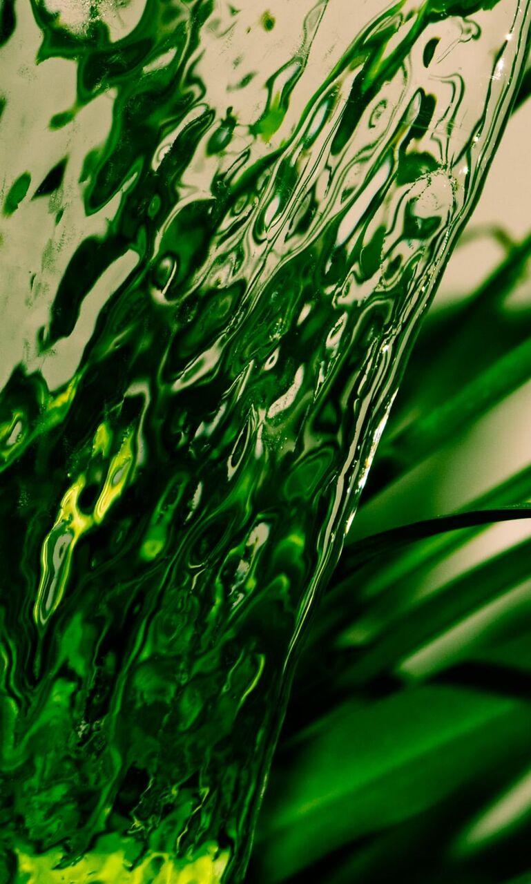 水 氷 植物 緑 葉の壁紙お市ゃ私の叫びのiphoneの子 草 自然 高精細の画像は 材料を入力します 壁紙