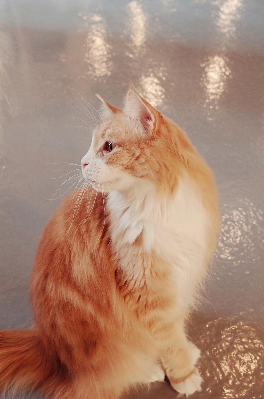 猫 猫の壁紙のhdコーヒーショップ かわいい 動物 ペット かわいい動物 猫 高精細の画像は 材料を入力します 壁紙