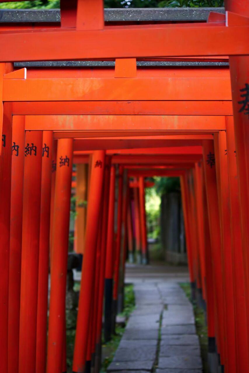 稲荷神社と赤い鳥居 Hdの壁紙お市ゃ私泣くへやの写真 材料を入力します 壁紙