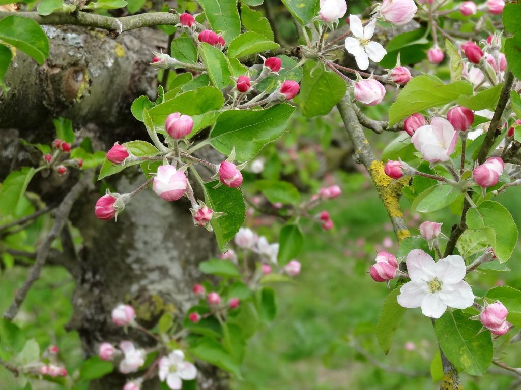 花 花 春 フルーツ 自然 風景 高精細の画像 バック区里のsu馬蘇の壁紙車のpc材料 壁紙