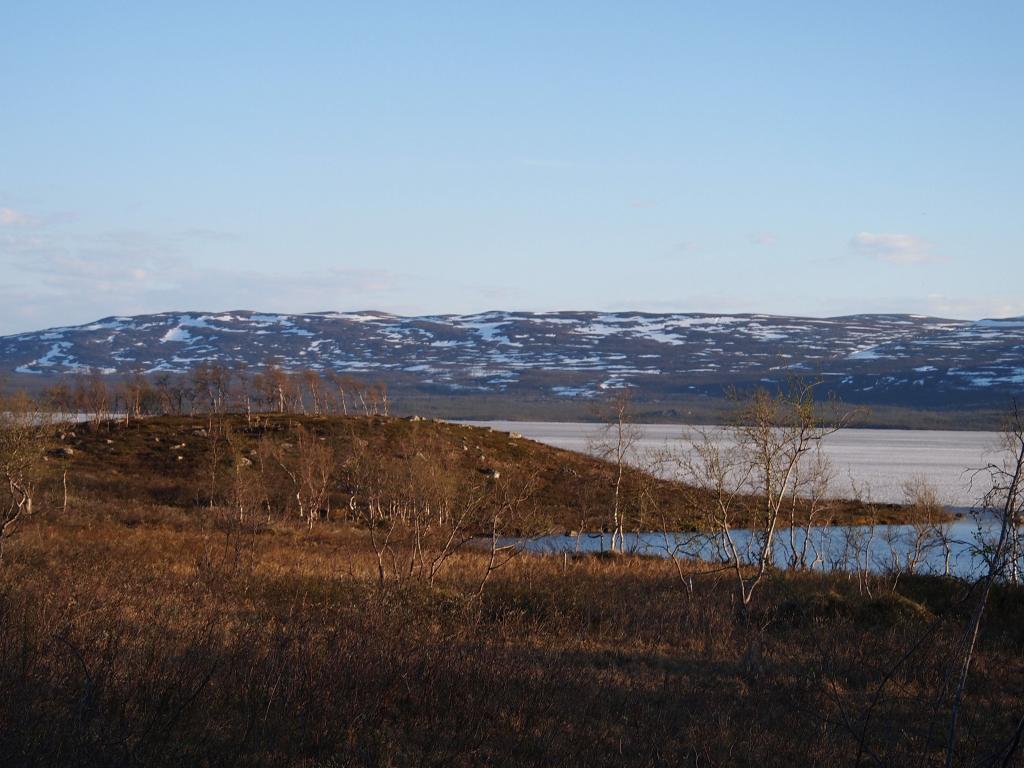 フィンランド 蘭の花 美しさ 水 湖 夏 自然 高精細画像に適したラップ壁紙タタリテスト 材料を入力します 壁紙
