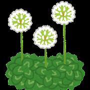 flower_shirotsumegusa