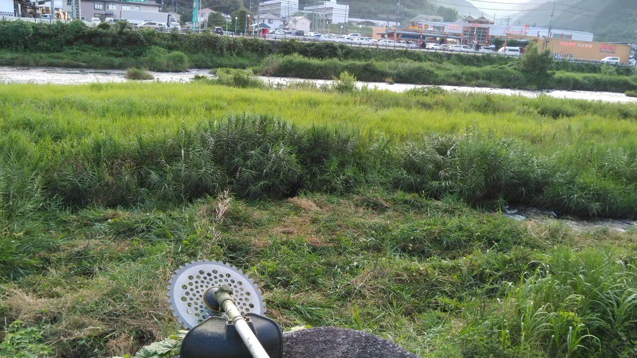 今年最初の河原の草刈り