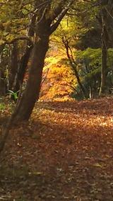 星山登山紅葉