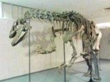 恐竜だよ〜ん