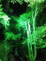 キレイ、涼しい神庭の滝のライトアップ