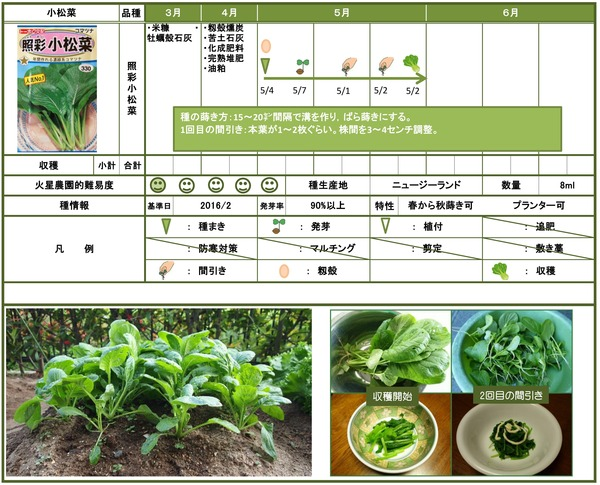 2015年小松菜