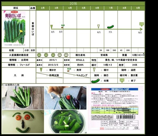 2016年栽培日記胡瓜結果