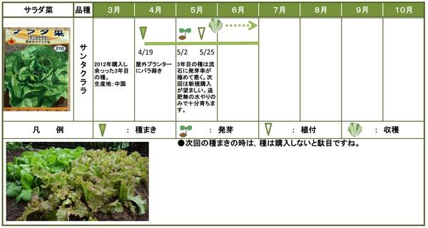 2014年日記6月サラダ菜