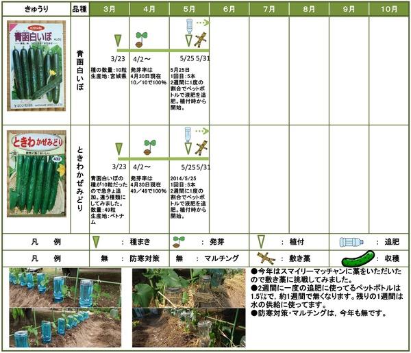 2014年日記5月きゅうり