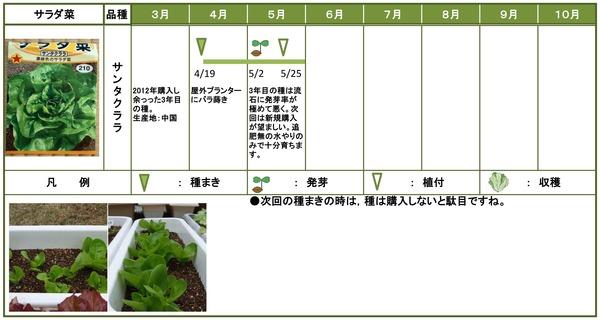 2014年日記5月サラダ菜