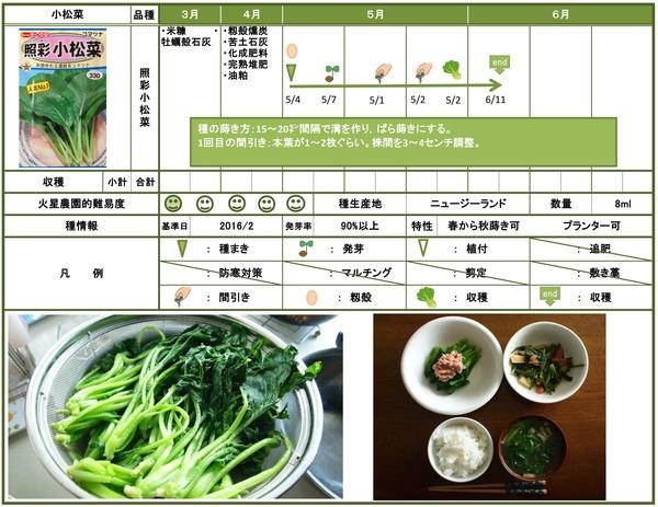 6月小松菜