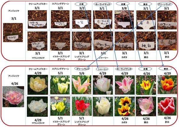 2014年開花
