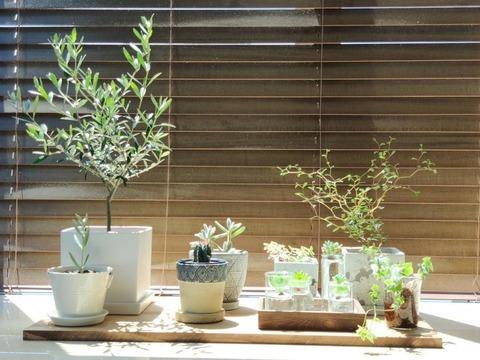 彡(゚)(゚)「観葉植物は意外と懐く」