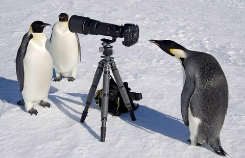 ペンギン「お、でっかい友達やんけ!」