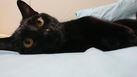 【画像】ワイの家のネコがかわいい