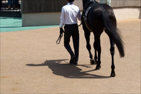 名馬巨人小笠原、種馬生活を終え死亡