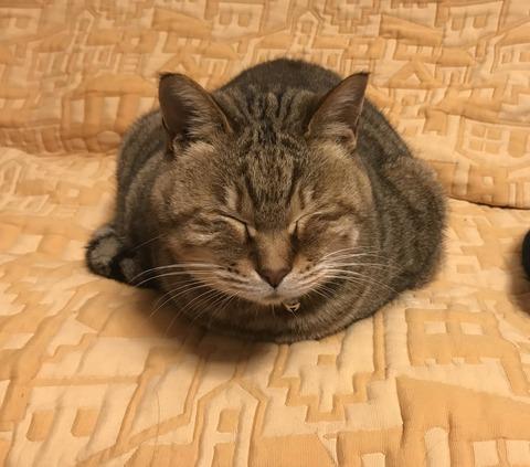 ワイ「トイレ行ってくるわ」猫「わかったで」