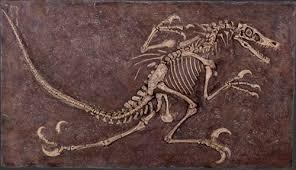 彡(゚)(゚)「ヤモリが化石みたいになってる」