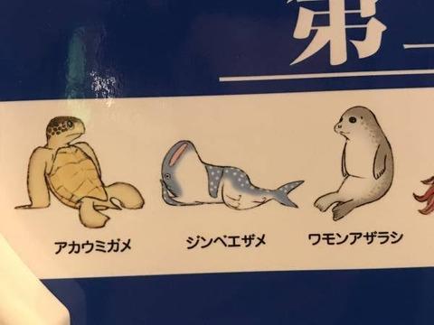 【朗報】野獣先輩、ウミガメだった