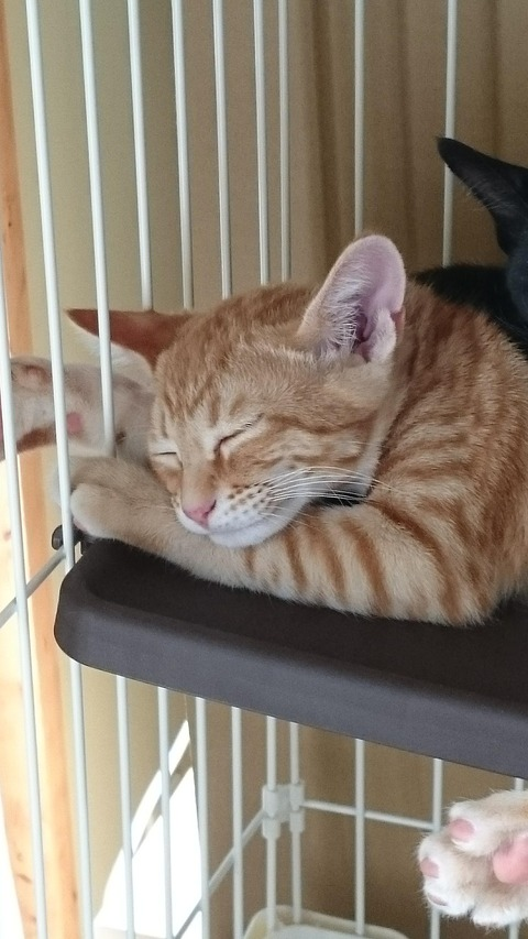 【悲報】ネッコ飼育初心者ワイ、生活に疲れる