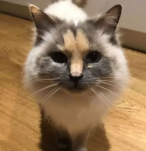 一人暮らしで猫飼うのって辞めた方がええか?