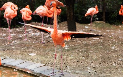 鳩「フラミンゴの群れに紛れ込んでしもた...せや!」