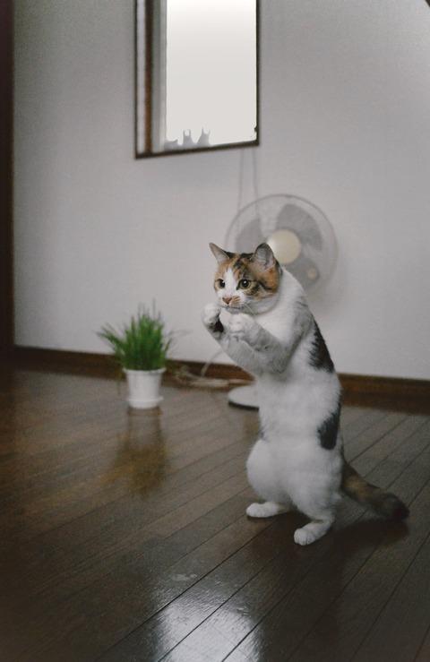 【画像】スーパーサイヤ猫 見つかる