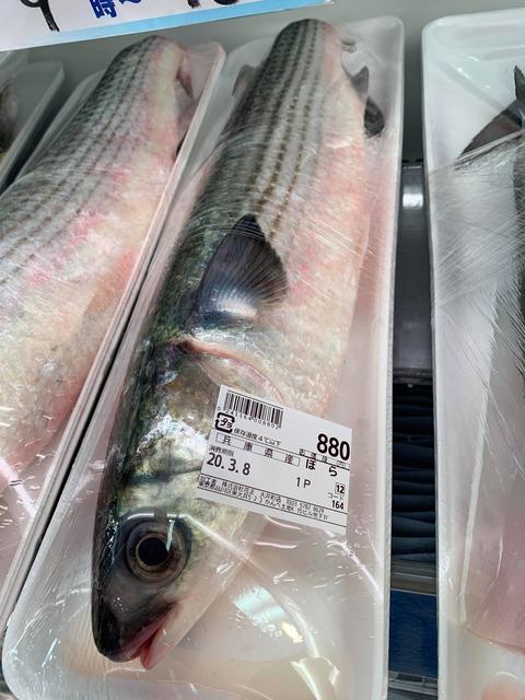 【ケンモ飯集】(ヽ´ん`)「魚をスーパーで買う奴は馬鹿、釣ってくればタダで食い放題なんだぞ」