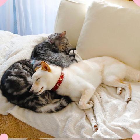 イッヌとネッコ、お昼寝