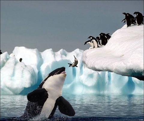 【悲報】ワイペンギン、自分が飛べないことに気づく