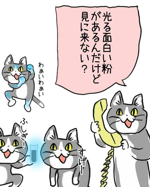猫 コラ 現場