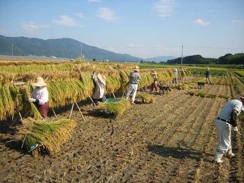 【悲報】農J民、専門板で叱られる