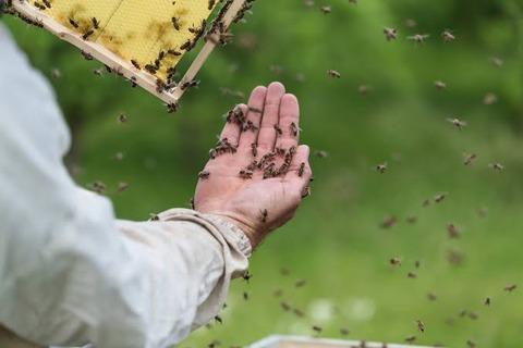【悲報】ハチ「ぶーん♪」 1万匹襲来