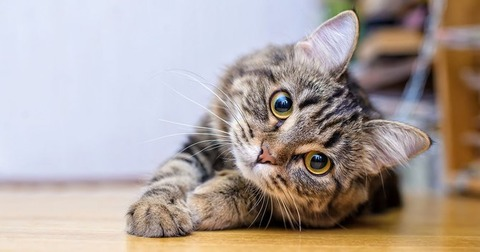 この猫の種類分かる奴おる?