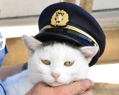 【悲報】猫のお巡りさん、任命式で脱走