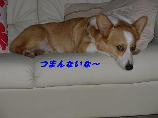 09a14012.jpg