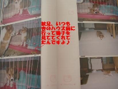 2cdca731.jpg