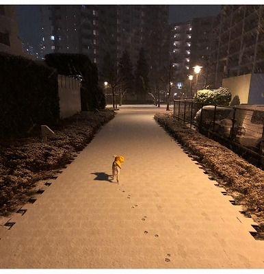 (1)2018 大雪だ!