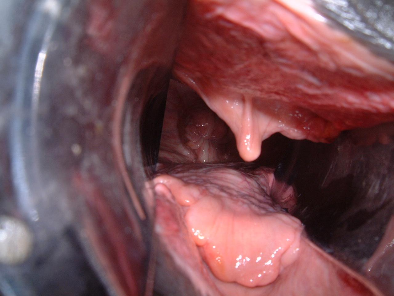 まんこ解剖 牝馬の牡馬を受け入れる気分は上々であろう。尻尾を真上に上げて、ライトニング(陰核をパカパカと見せる)もおそらく見せるに違いない。