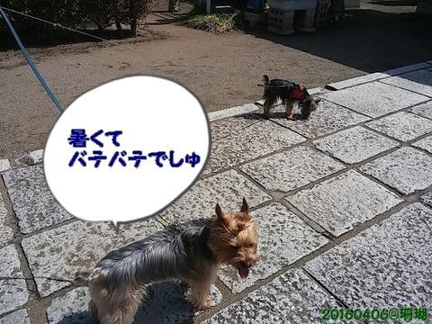 20160409_100853