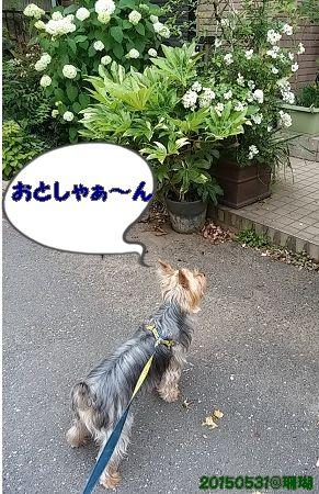 20150530_170352
