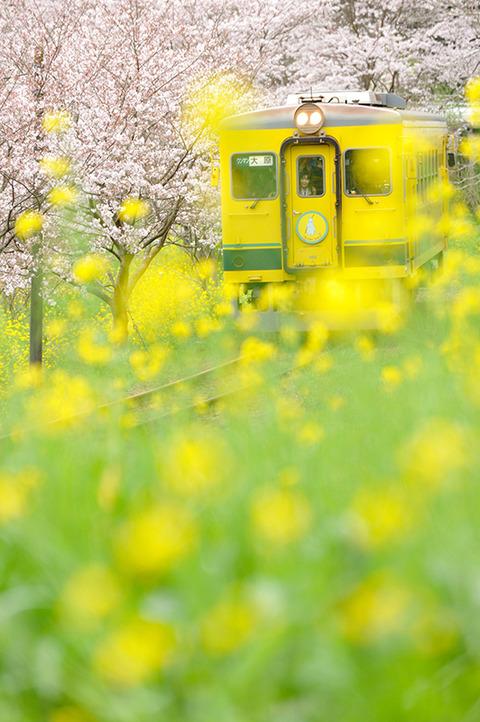 shiki-main-photo