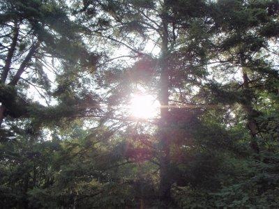 木漏れ日-s