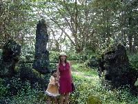 溶岩樹公園2